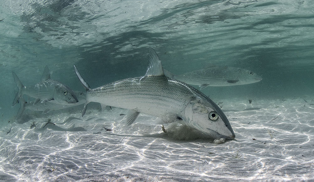 bonefish casa blanca fly fishing